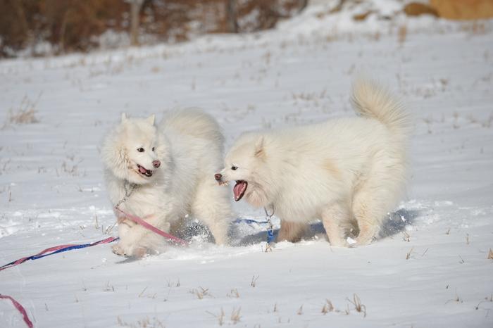 初冬の奥飛騨へ_a0049296_18295636.jpg