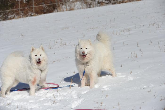 初冬の奥飛騨へ_a0049296_18305097.jpg