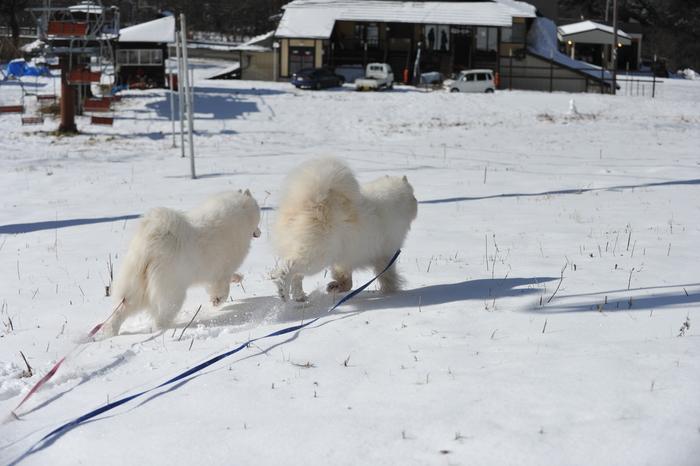 初冬の奥飛騨へ_a0049296_18314415.jpg
