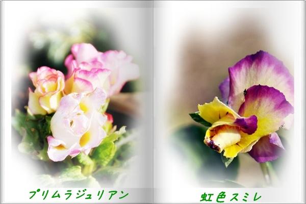 f0176499_1505220.jpg