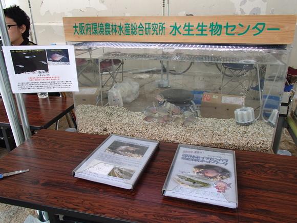 外来魚駆除釣り大会in淀川2013秋_a0263106_15305335.jpg