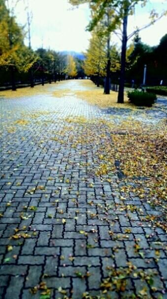 秋から冬へ_e0001906_8103776.jpg