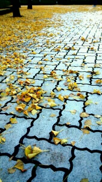 秋から冬へ_e0001906_874818.jpg