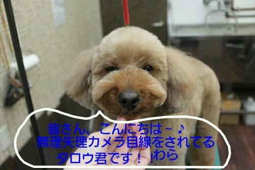 b0130018_9515017.jpg