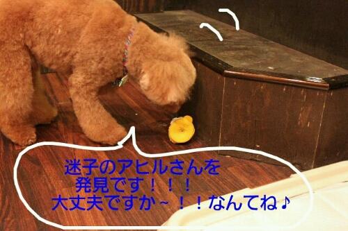 b0130018_9515215.jpg