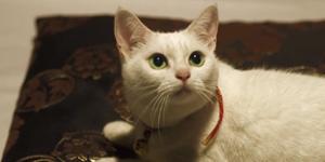 猫侍_d0001873_1631155.jpg