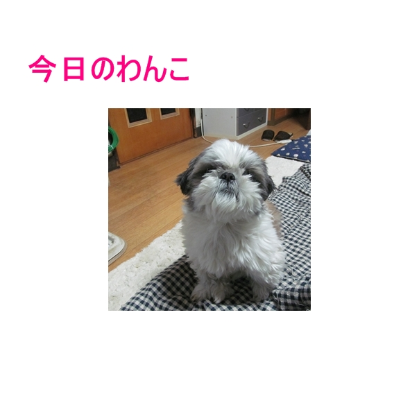 b0124693_76454.jpg