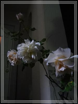 b0110603_18322319.jpg