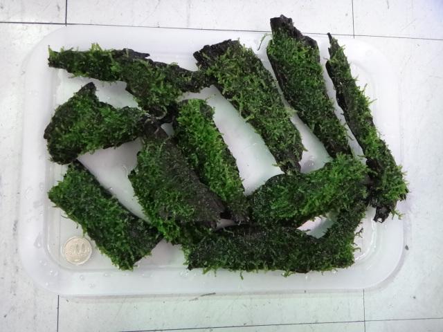 131212 熱帯魚・水草_f0189122_13253670.jpg