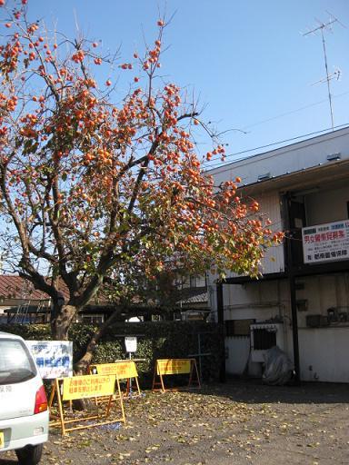 町田駅周辺を散歩_c0217931_10532629.jpg