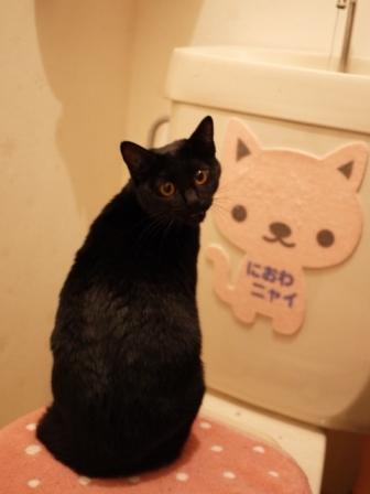 トイレの黒猫 ぎゃぉすてぃぁら編。_a0143140_23205531.jpg