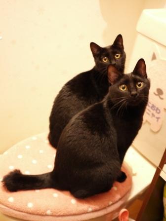 トイレの黒猫 ぎゃぉすてぃぁら編。_a0143140_23221017.jpg