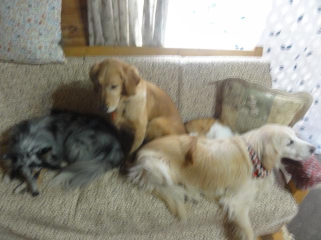 どうしてもみんなとソファーで寝たいメル_a0267851_15030138.jpg