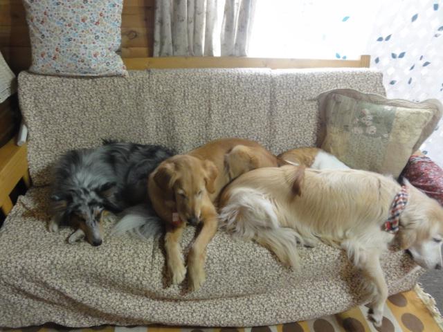 どうしてもみんなとソファーで寝たいメル_a0267851_15030514.jpg