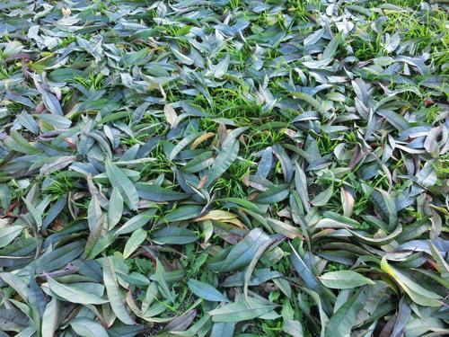 落ち葉の季節のこと。_a0263653_2375218.jpg