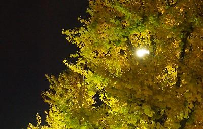 師走の夜の輝き_a0131787_15105463.jpg