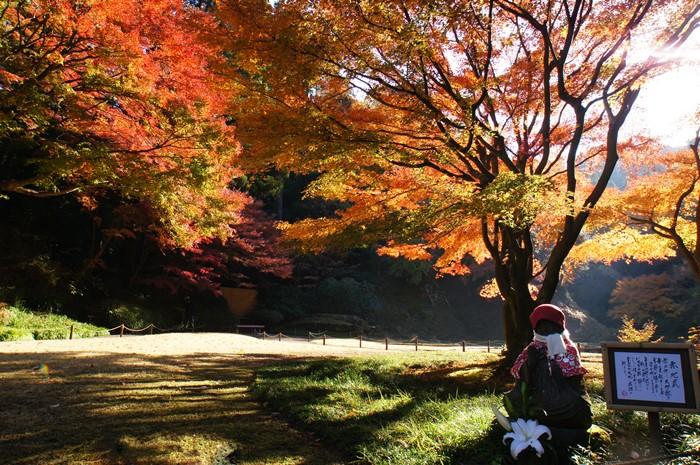 鎌倉 明月院の紅葉が見頃でした_b0145398_16332256.jpg