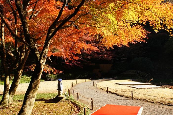 鎌倉 明月院の紅葉が見頃でした_b0145398_16332943.jpg