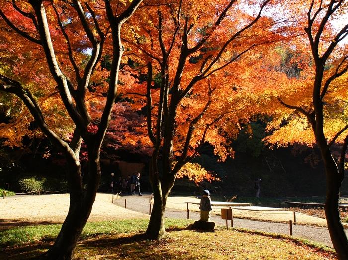 鎌倉 明月院の紅葉が見頃でした_b0145398_16342339.jpg