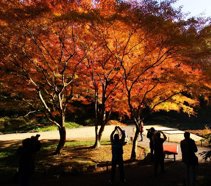 鎌倉 明月院の紅葉が見頃でした_b0145398_16381560.jpg