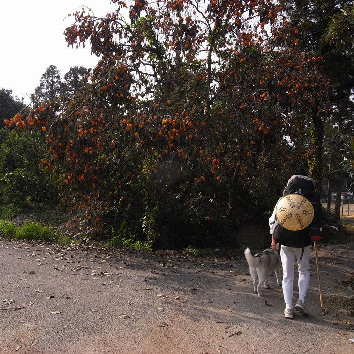 Memory of the second pilgrimage with Husky HANA II_c0049299_15172236.jpg