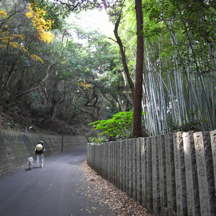 Memory of the second pilgrimage with Husky HANA II_c0049299_15192039.jpg