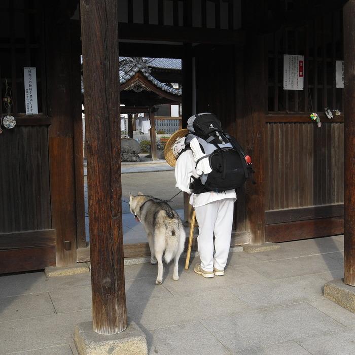 Memory of the second pilgrimage with Husky HANA II_c0049299_15255228.jpg