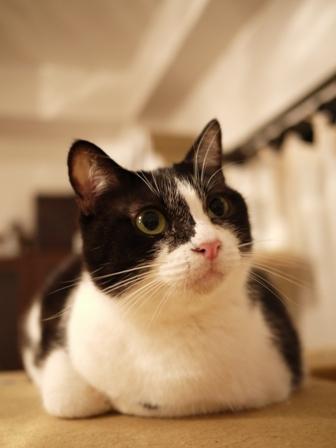 暗闇の真顔猫 しぇるらぃら編。_a0143140_23245671.jpg