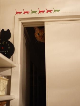 暗闇の真顔猫 しぇるらぃら編。_a0143140_23253626.jpg