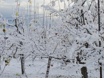 雪降りました   12・13_e0019167_8383068.jpg