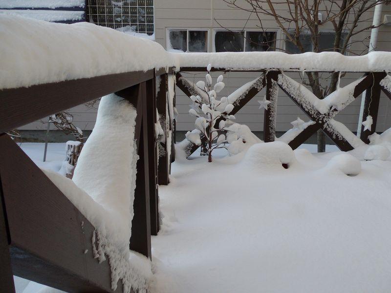この冬初めての本格的除雪_c0025115_20343784.jpg