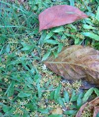 南の島の季節感_a0043520_1420882.jpg