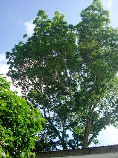 南の島の季節感_a0043520_14214956.jpg
