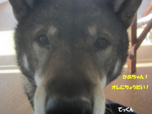 f0143123_951182.jpg