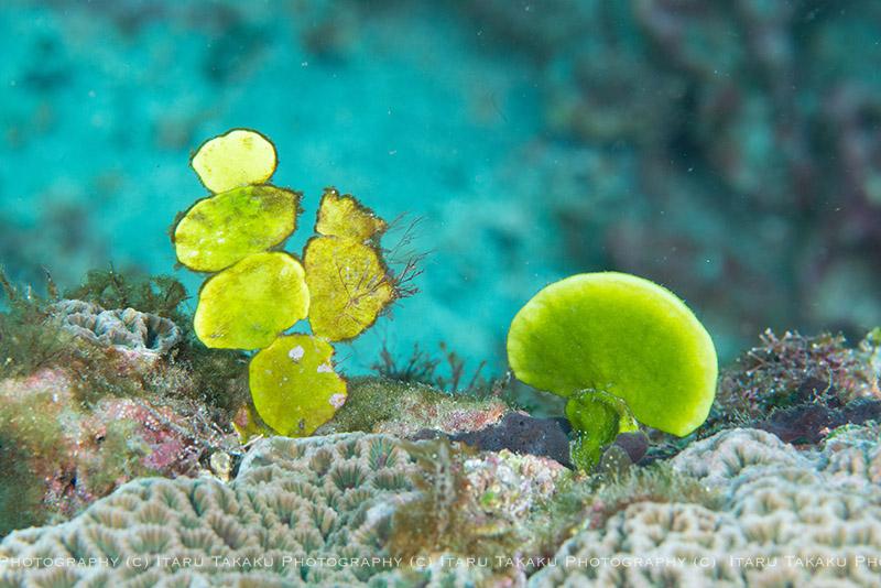 地味に海藻が成長中!_b0186442_224387.jpg