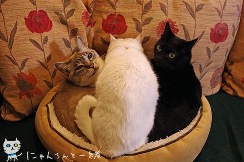 猫盛り一丁上がり〜♪_e0031853_21162177.jpg