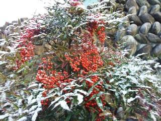 プチ便り(初雪)_a0206870_1562210.jpg