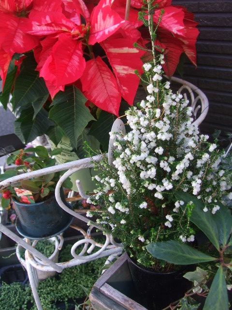 オークリーフ(冬の花たち)_f0049672_11334747.jpg