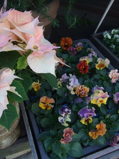 オークリーフ(冬の花たち)_f0049672_1134116.jpg