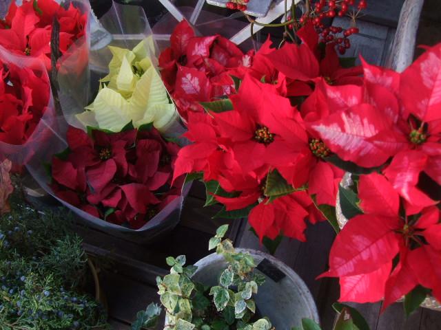 オークリーフ(冬の花たち)_f0049672_1134851.jpg