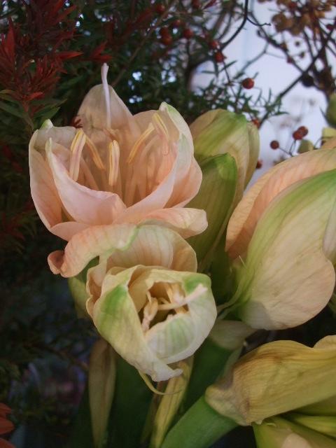 オークリーフ(冬の花たち)_f0049672_11431292.jpg
