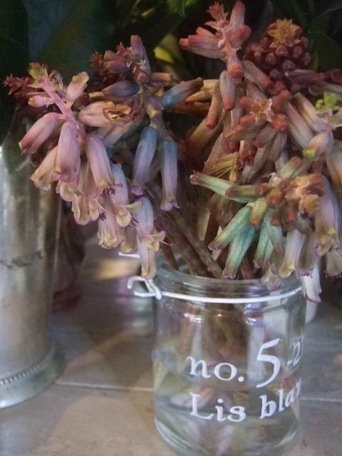 オークリーフ(冬の花たち)_f0049672_11431781.jpg