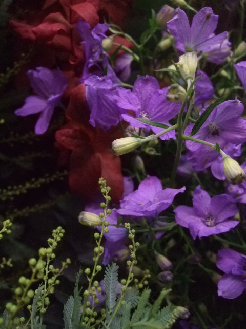 オークリーフ(冬の花たち)_f0049672_11433039.jpg