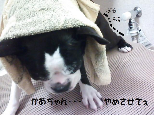 ★無邪気なデビル現る★_d0187891_17232588.jpg