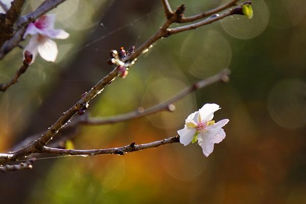 鎌倉に紅葉巡り 浄妙寺の紅葉_b0145398_23435100.jpg