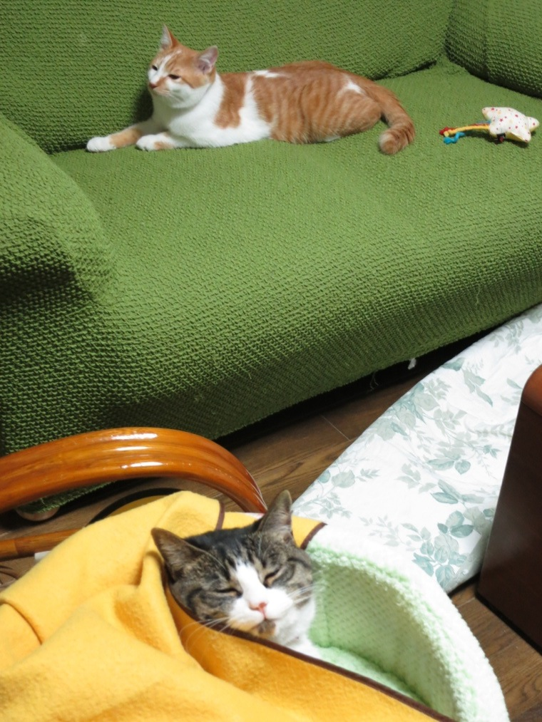 【猫】仲良く?_f0141609_118295.jpg