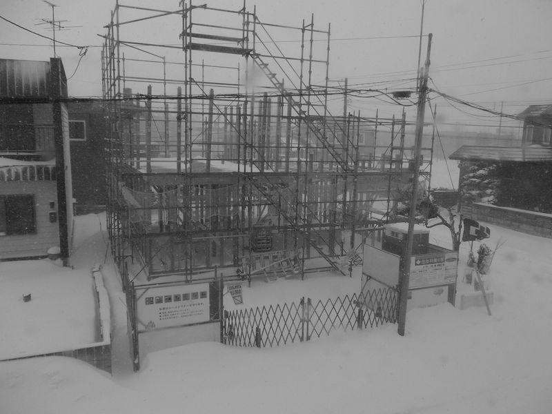 外は暴風雪、家の中はネコの天下_c0025115_20385939.jpg