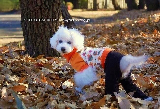 初冬の公園_d0083623_2257132.jpg