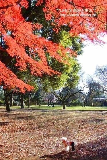 初冬の公園_d0083623_23105035.jpg