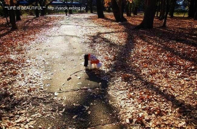 初冬の公園_d0083623_23124352.jpg